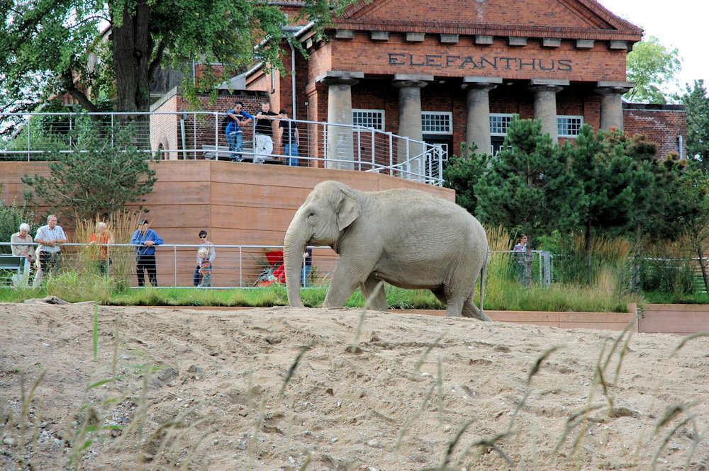 Elefant i København Zoo — Foto: Gaute Nordvik